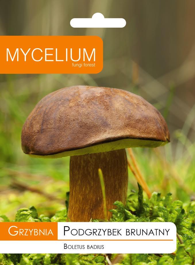 MYCELIUM SUBMUSHROOM BROWN Грибы в саду