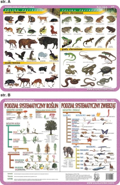Item BIOLOGY ANATOMY ANIMAL and HUMAN Medicine 15 p