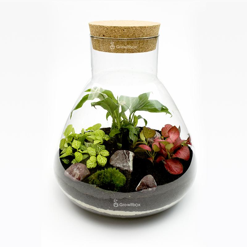 Las w słoiku - zestaw 2 mossarium, Growitbox