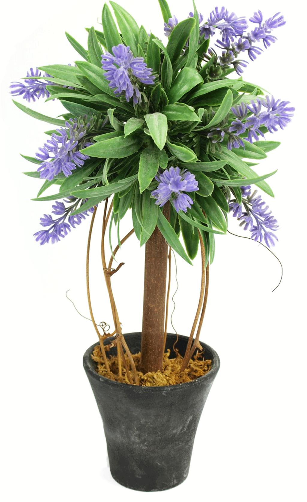 Lawenda Piękne Kwiaty Doniczka Parapet Prezent 6950805837