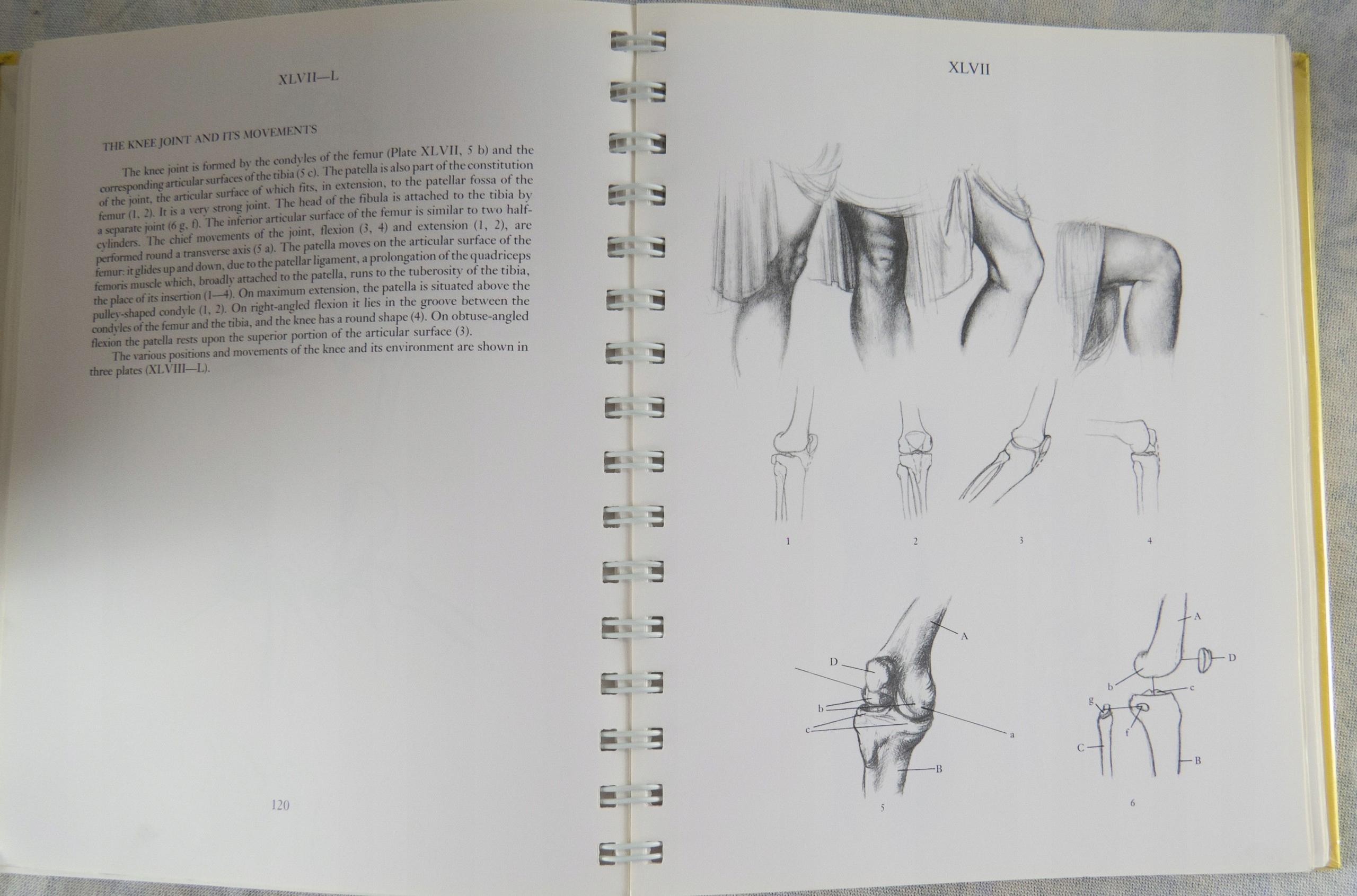 Anatomy For The Artist Jeno Barcsay 7458851773 Oficjalne