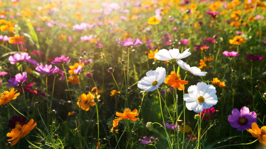 Laka Kwiatowa W Ogrodzie Jak Ja Zrobic Do Czego Pasuje Allegro Pl