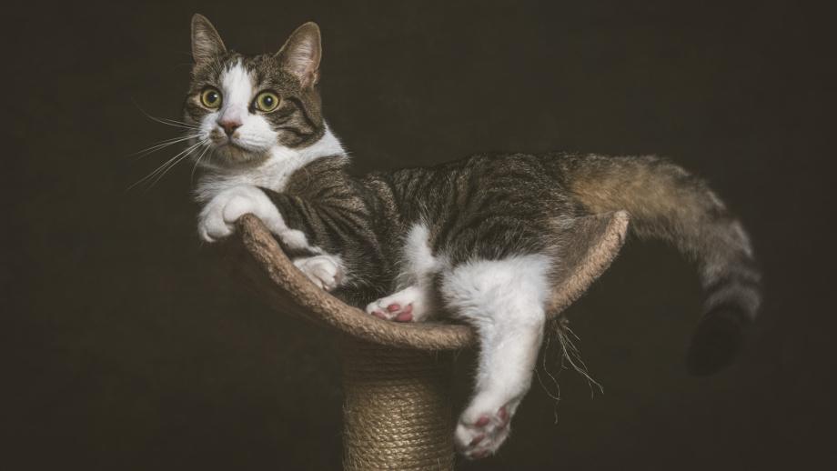 Aké vlastnosti by mala mať škrabka na mačky?