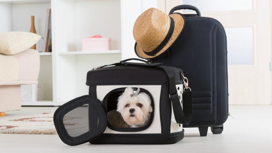 Najvýhodnejšia prepravná taška pre malého psa