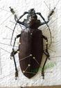 булавки полезно для препарирования насекомых
