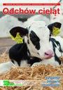 Odchów cieląt - żywienie choroby hodowla bydła