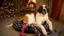 LEGOWISKA dla psa kojec ponton łapki psa 100/70 R3 Kolor czarny odcienie brązowego odcienie szarości