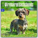 BrownTrout Publishers Dachshunds, Wirehaired 2017