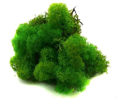 мох   олений 50g Light Green Grass